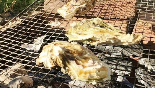 香川の牡蠣焼きが熱い!