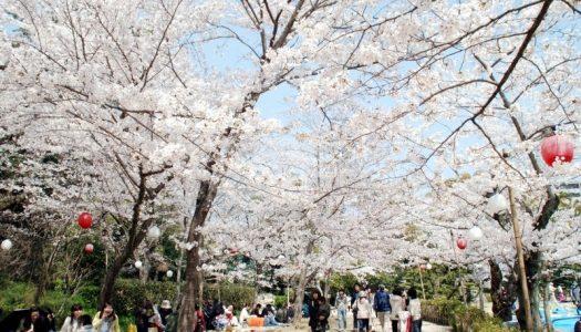 西日本のお花見まとめ