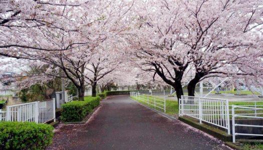 東日本のお花見まとめ